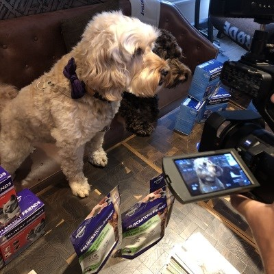 Picture perfect pooches are influencer marketing in action